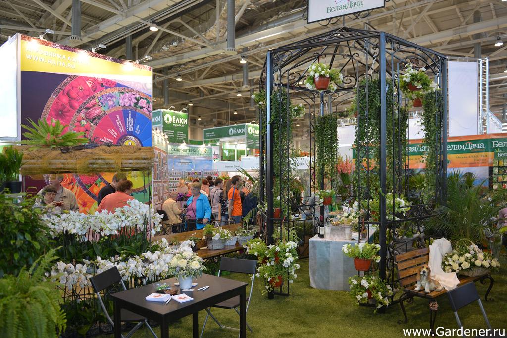 Flowers цветы выставка