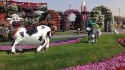 """Чудо-Сад"" в Дубае (Dubai Miracle Garden)"
